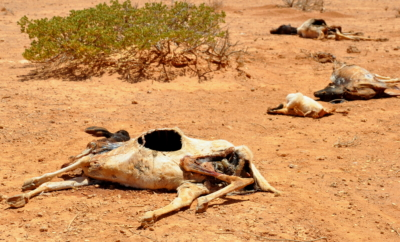 Klimakrise