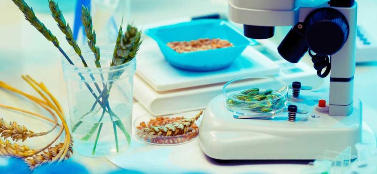Fremtidens GMO-regulering