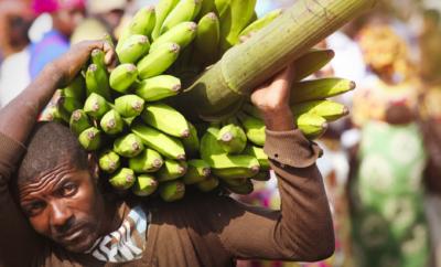 GMO i Afrika