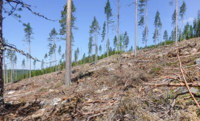 Skog og klima