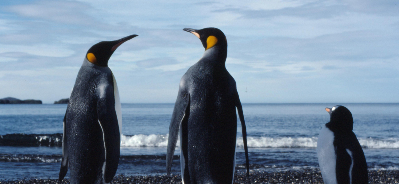 Havområdene utenfor Antarktis