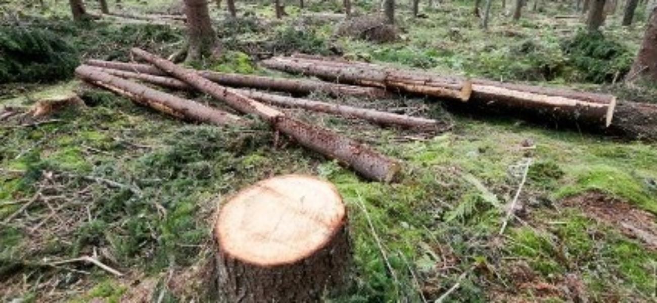 Lukket hogst og skogproduksjon